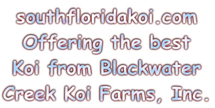 southfloridakoi.com 